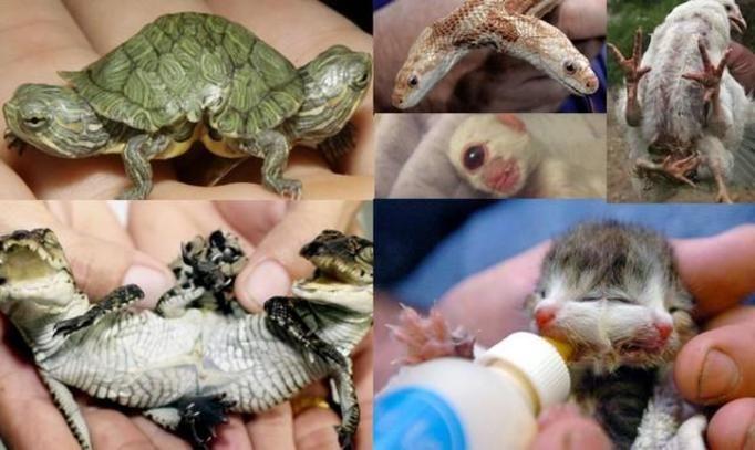 zdeformowane zwierzęta
