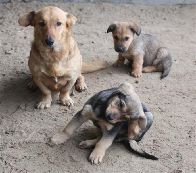 psy ze schroniska