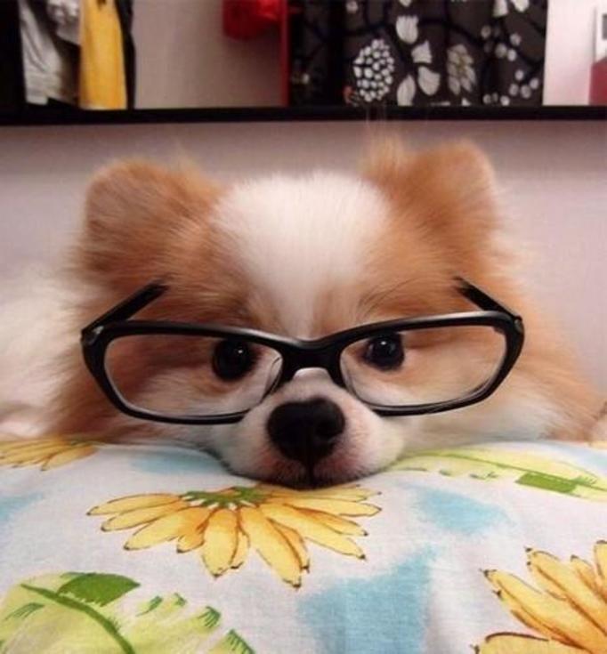 zwierzeta w okularach