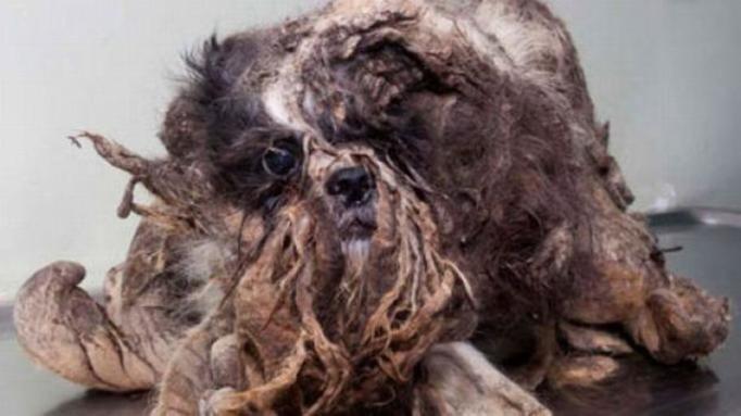 najbrudniejszy pies świata
