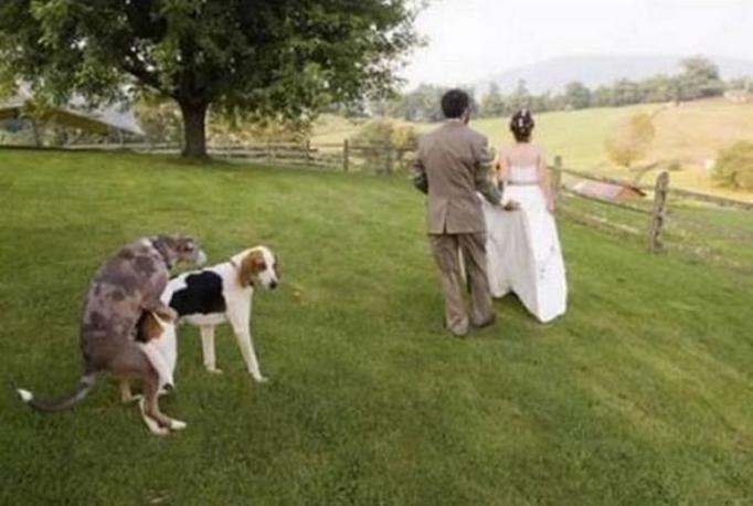 ślubne wpadki