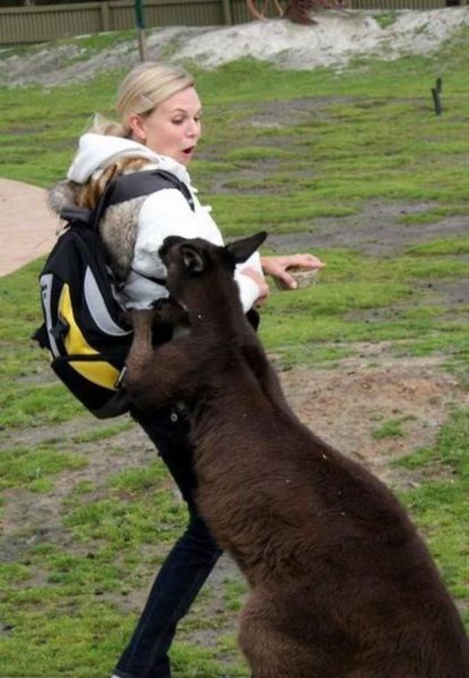 atakujące zwierzę