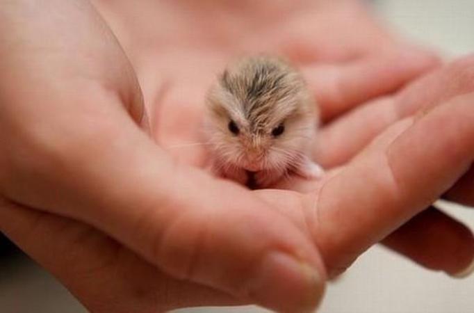 Słodkie fotografie zwierząt
