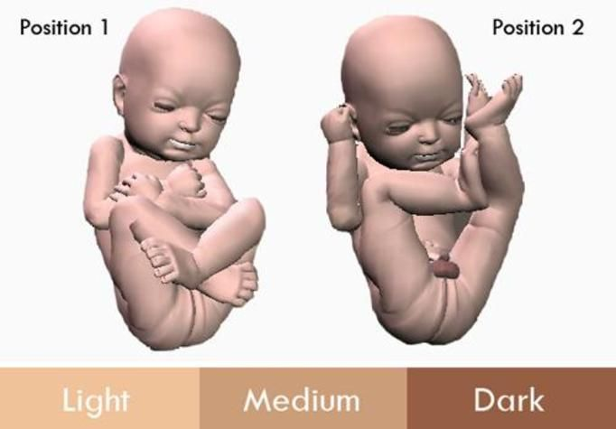 płód 3d