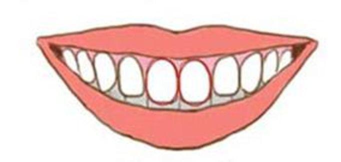 kształt zębów