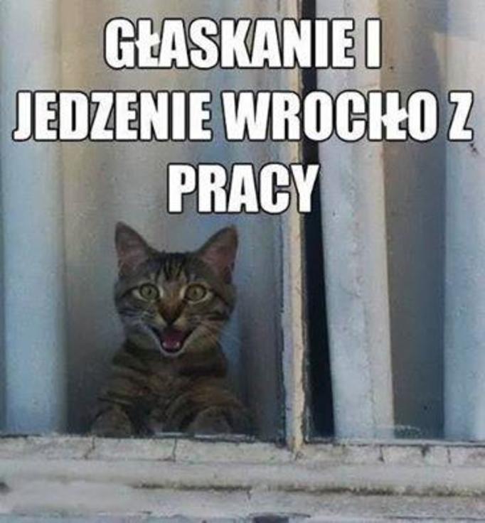 Memy o kotach