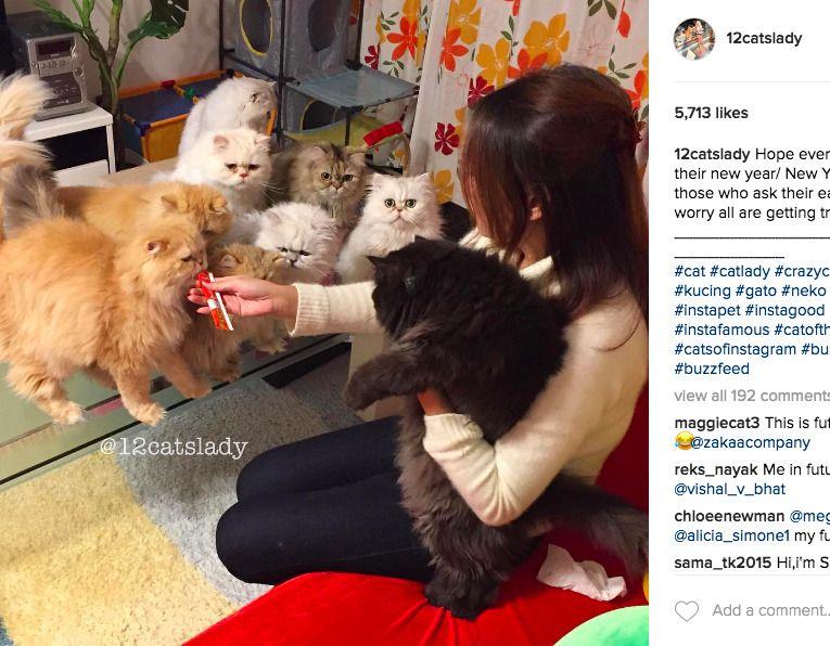 12 cats lady