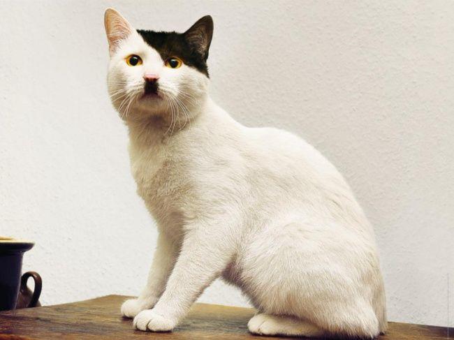 nietypowy kot