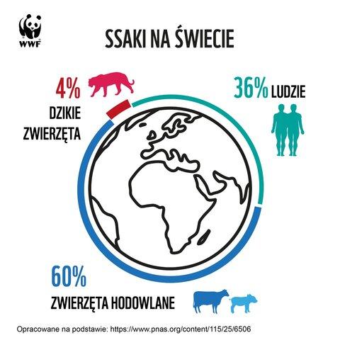 ssaki na świecie